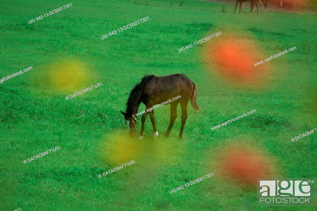 Stock Photo: Horse/ Thoroughbred.