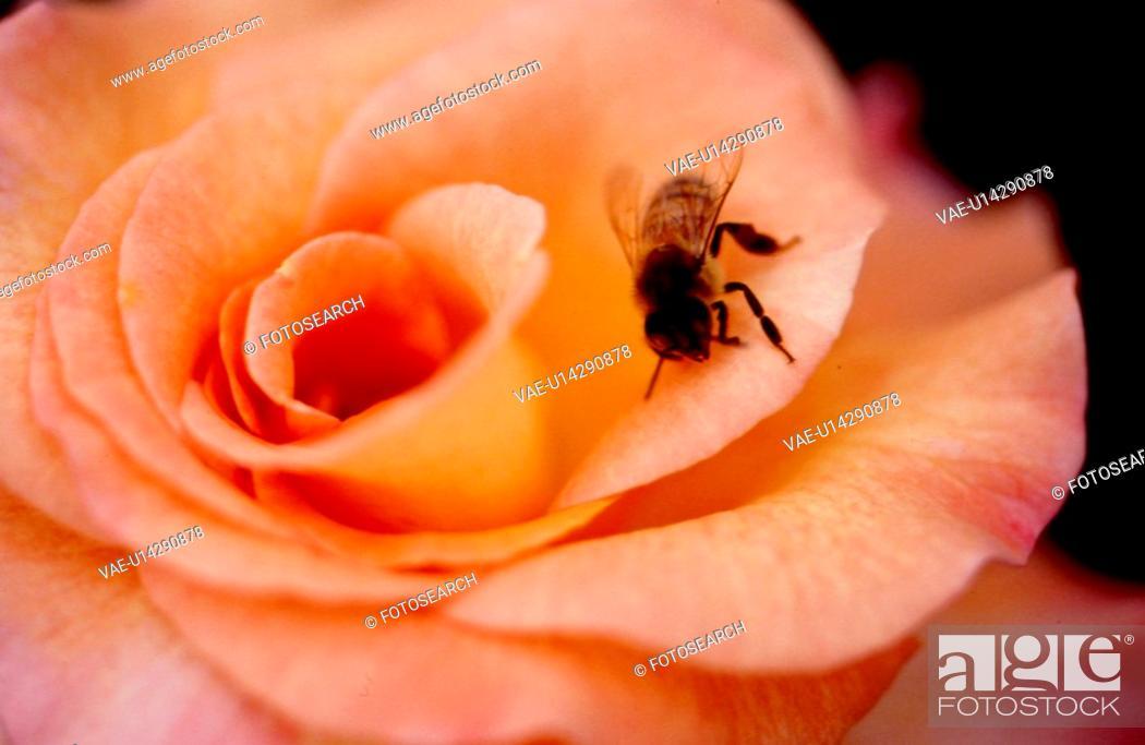 Stock Photo: orange flowers, nature, flowers, flower, scene, bee, landscape.