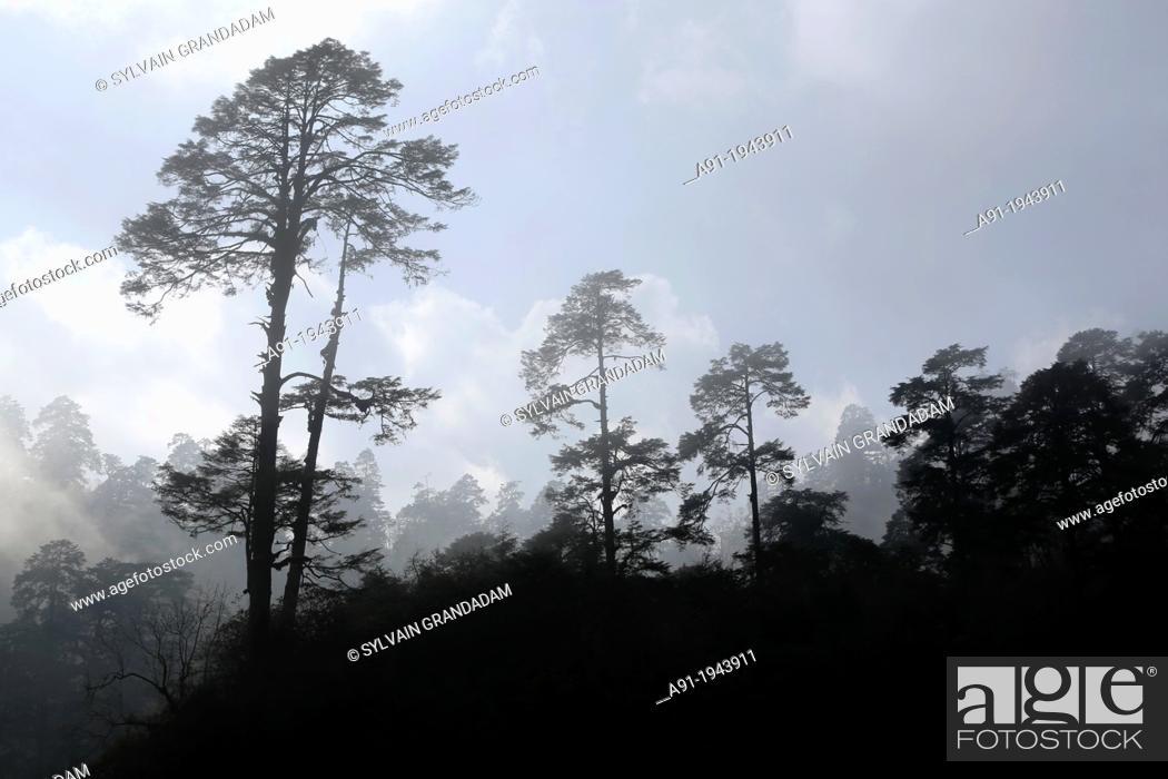 Stock Photo: Bhutan (kingdom of), the road from Thimphu to Punakha trough Dochu-la pass (3000 m), the royal botanical park.
