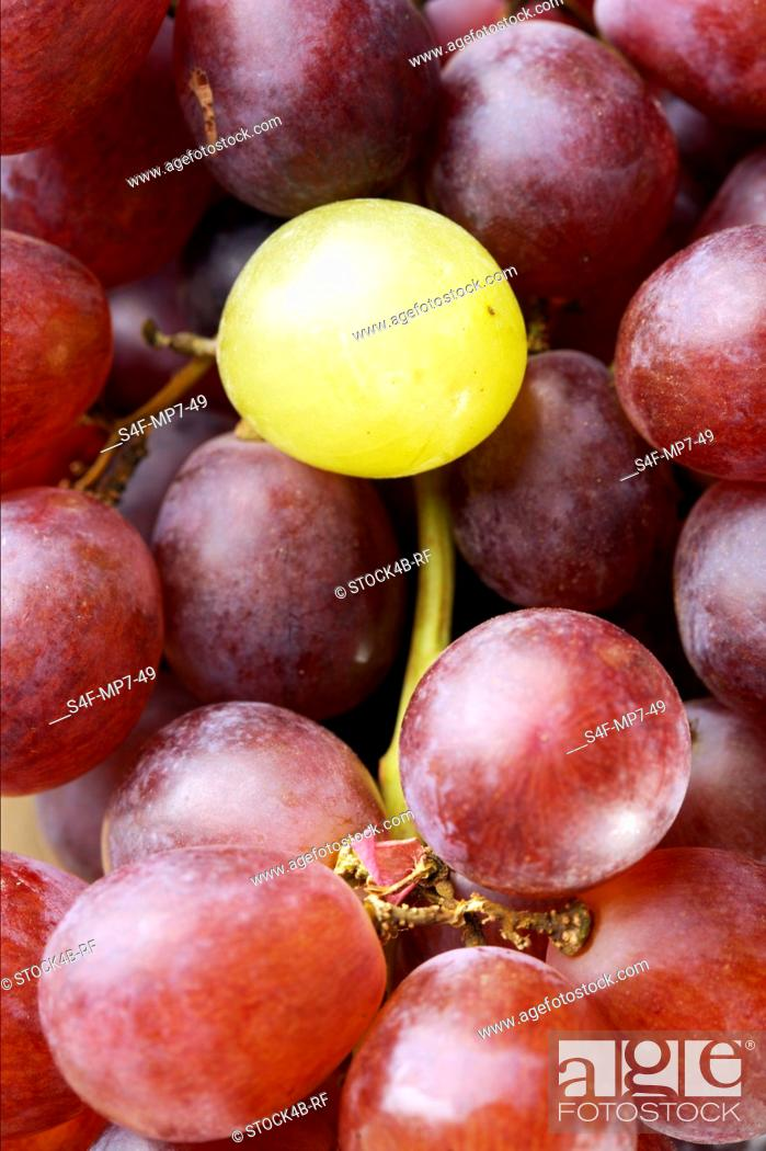 Stock Photo: Single white grape on bunch of red grapes.