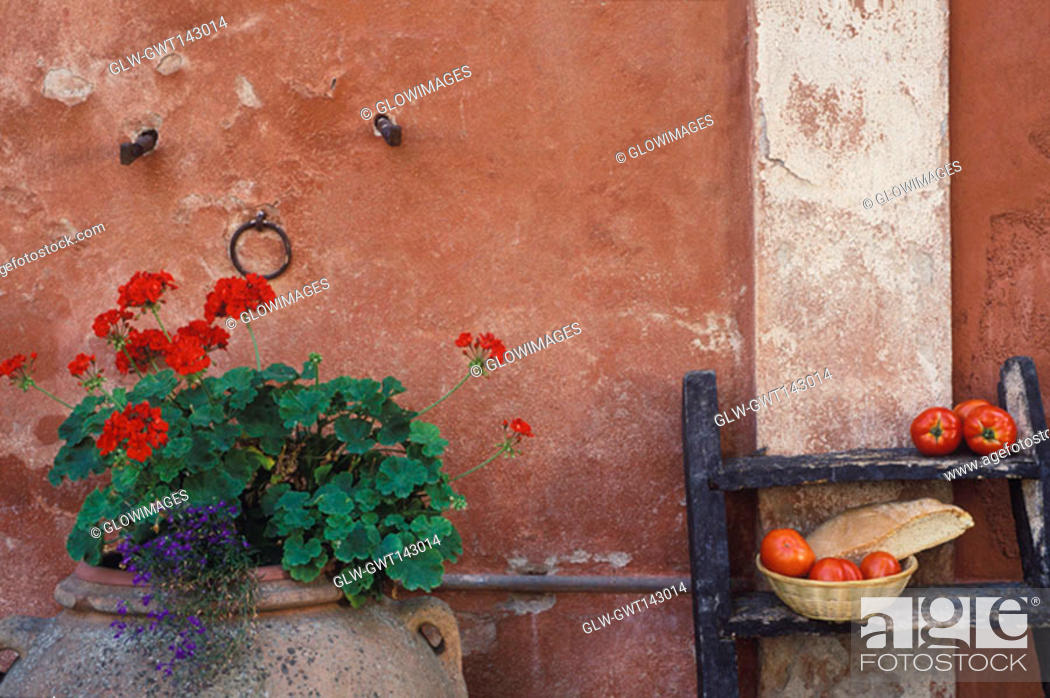 Stock Photo: Close-up of a potted plant in front of a wall.