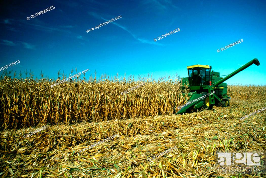 Stock Photo: Four row combine goes thru corn field, Henry farm, Clinton County, OH.
