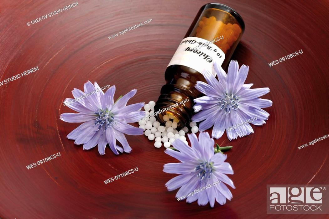 Stock Photo: Bottle with Bach Flower Stock Remedy, Chicory Cichorium intybus, elevated view.