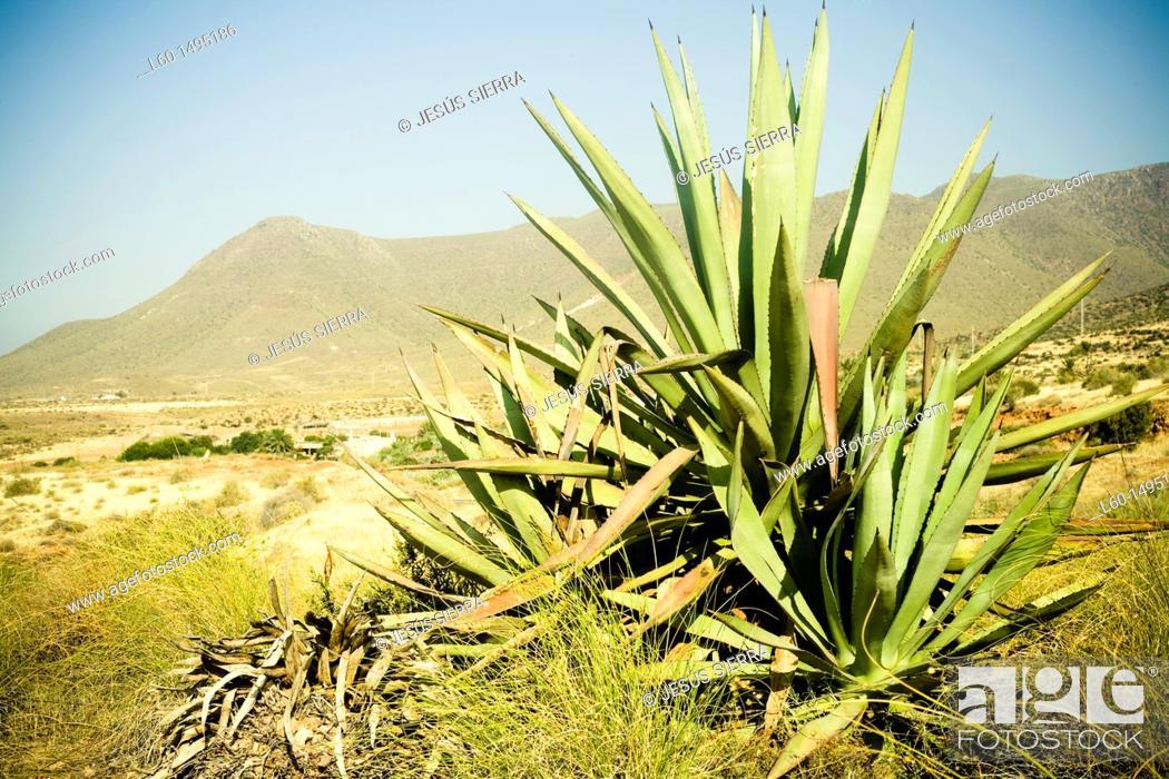 Stock Photo: Cabo de Gata, Almeria, Spain.