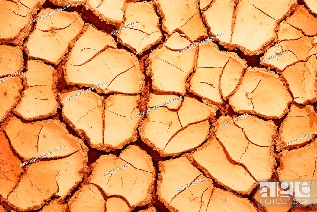 Stock Photo: Cracked soil, 2009.