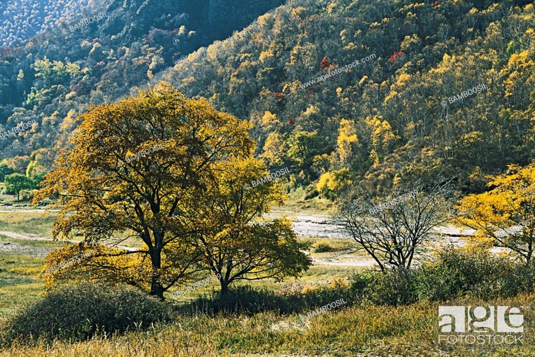 Imagen: Laozhang Valley, Guyuan County, Hebei Province of People's Republic of China.