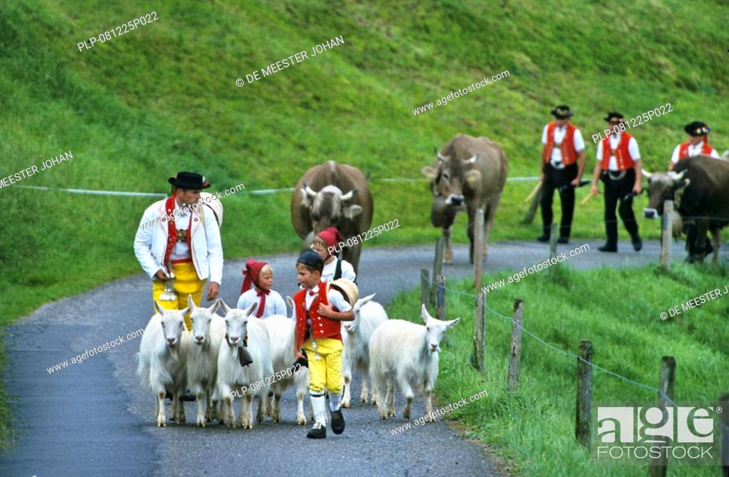 Stock Photo: Children and men in traditional costumes herding goats and alpine cows, Alpaufzug, Appenzell, Switzerland.