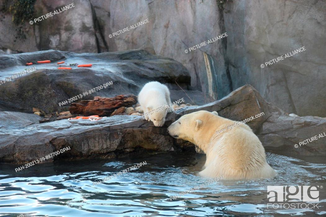 Stock Photo: 13 February 2020, Austria, Wien: The baby polar bear, which does not yet have a name and whose sex has not yet been determined.
