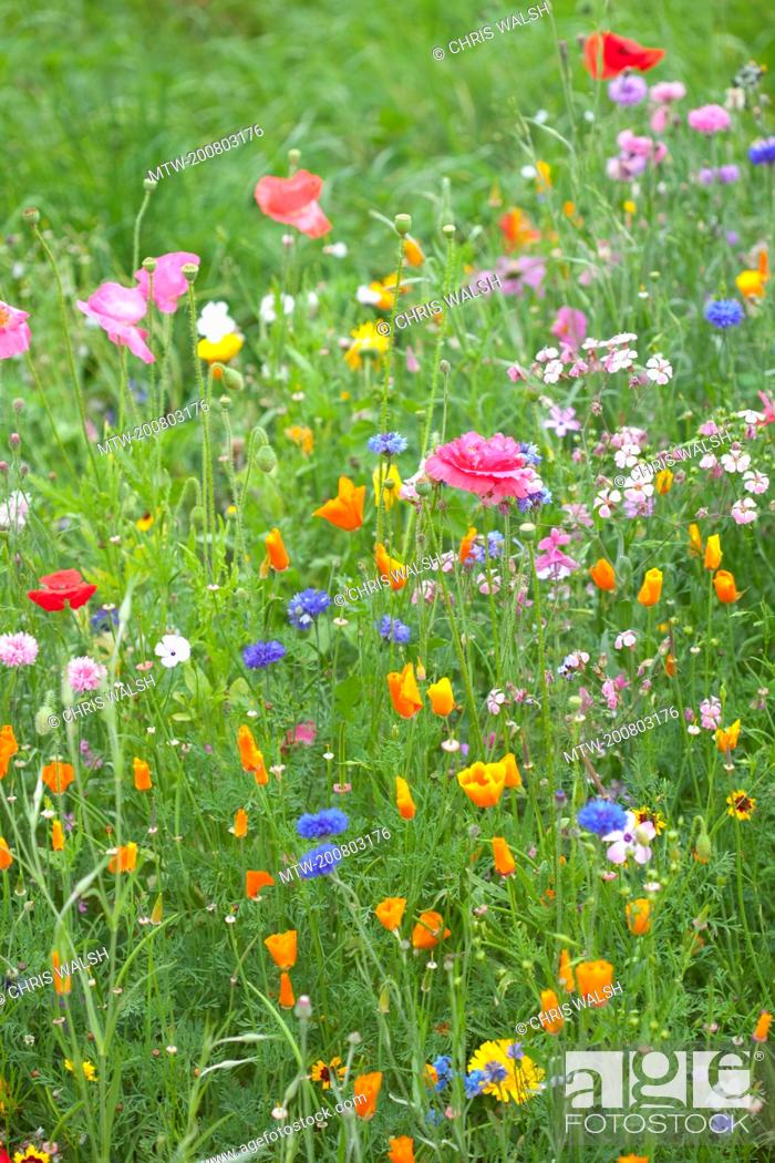 Stock Photo: Wild flowers colourful grass meadow field summer.
