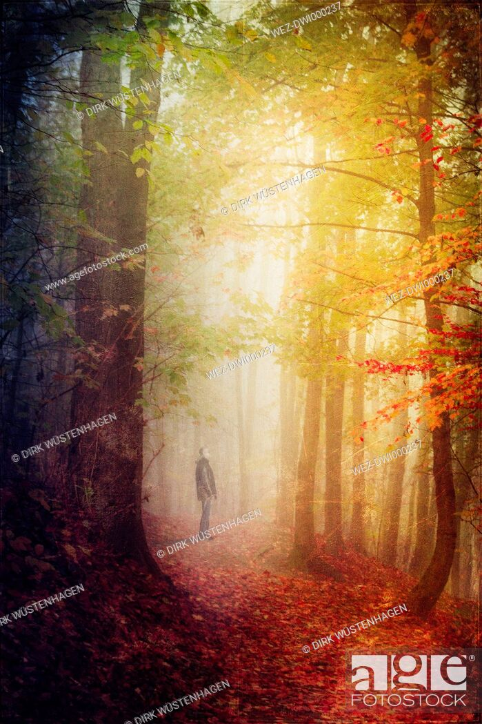 Imagen: Germany, autumn forest, man standing on forest track.