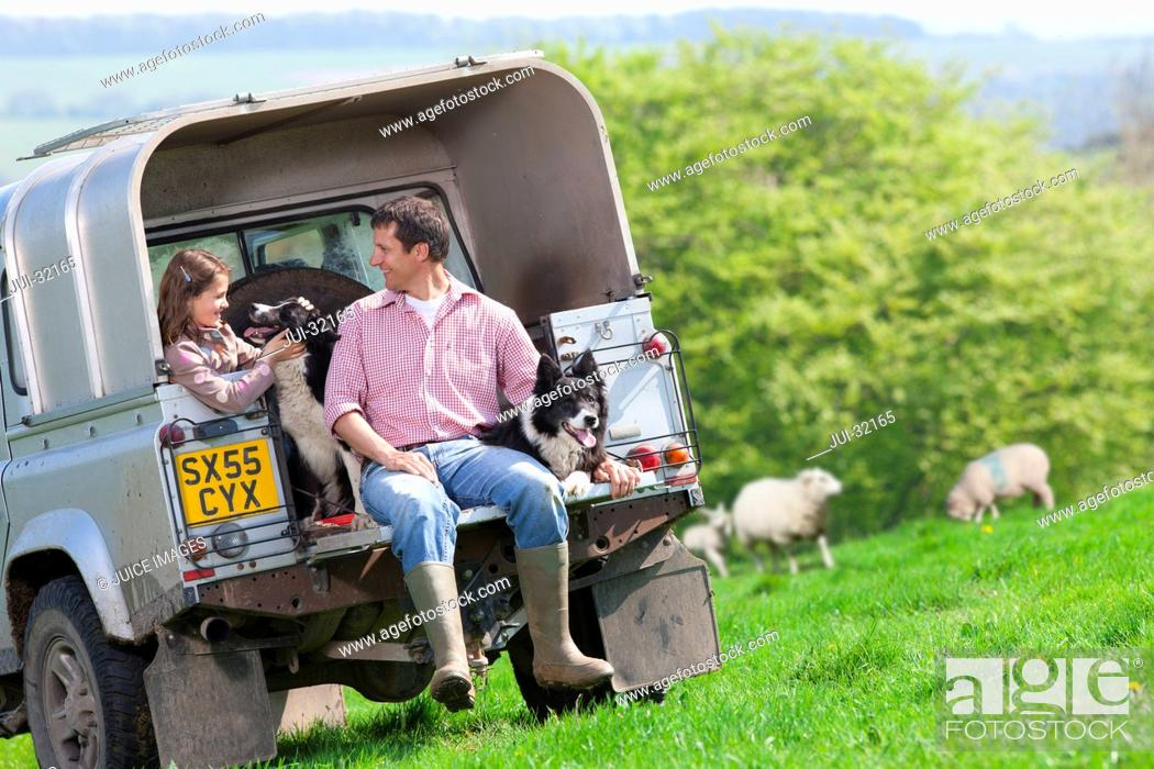 Stock Photo: Shepherd and daughter with dogs on tailgate of truck in field.
