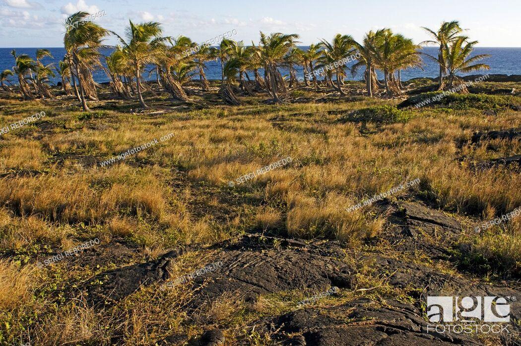 """Stock Photo: Pu'u Loa Petroglyphs. Hawai'i Volcanoes National Park. Big Island. Hawaii. Pu`u Loa, translated as the """"""""long hill""""""""i or """"""""Hill-(of)-long-(life)""""""""ii from."""