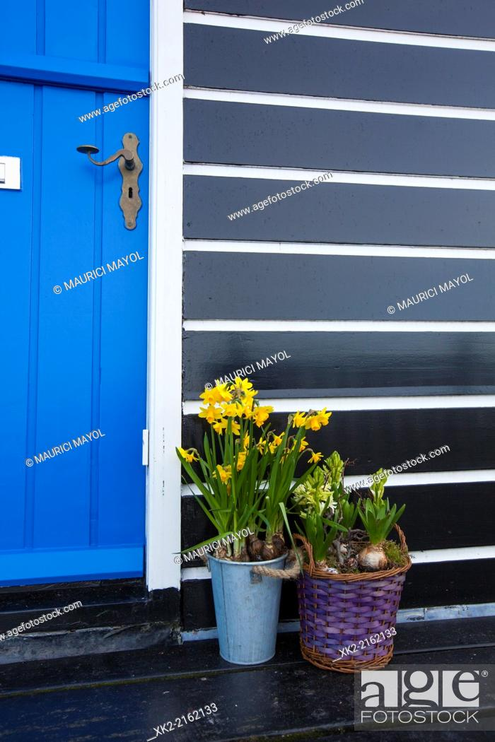 Stock Photo: Detail of a door with narcissus flower plants in Marken, Nederland.