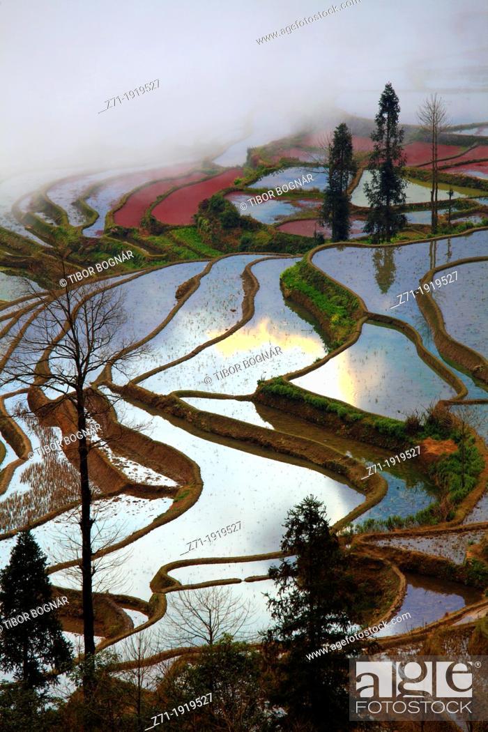 Stock Photo: China, Yunnan, Yuanyang, Shengcun, rice terraces,.