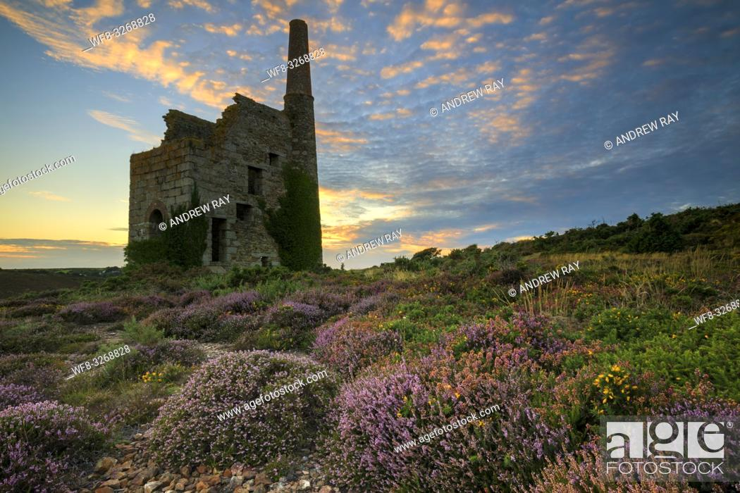 Stock Photo: Heather and gorse at Tywarnhayle Engine House.