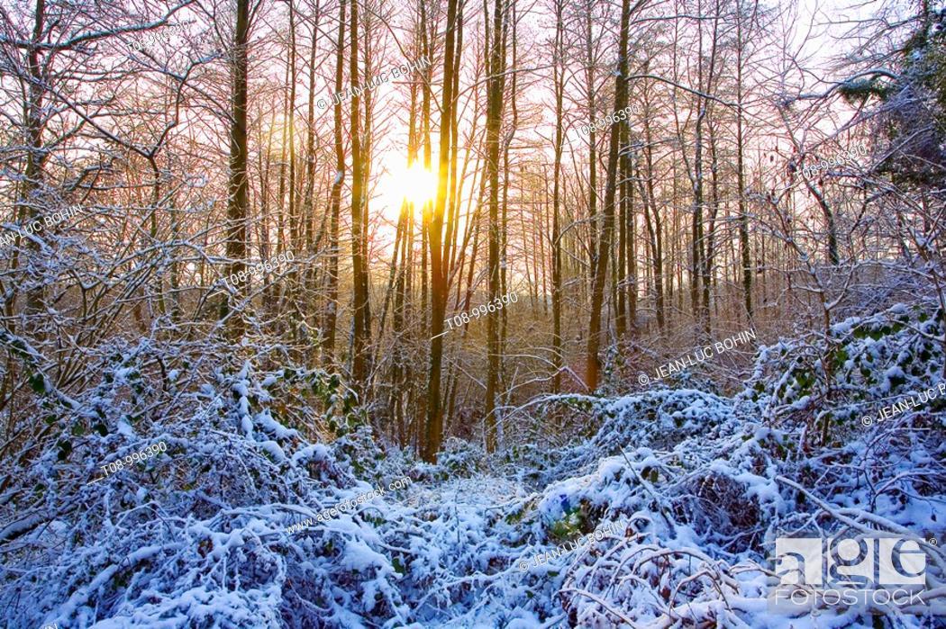 Stock Photo: france,île de france,vallée de chevreuse : soleil dans la forêt enneigée.