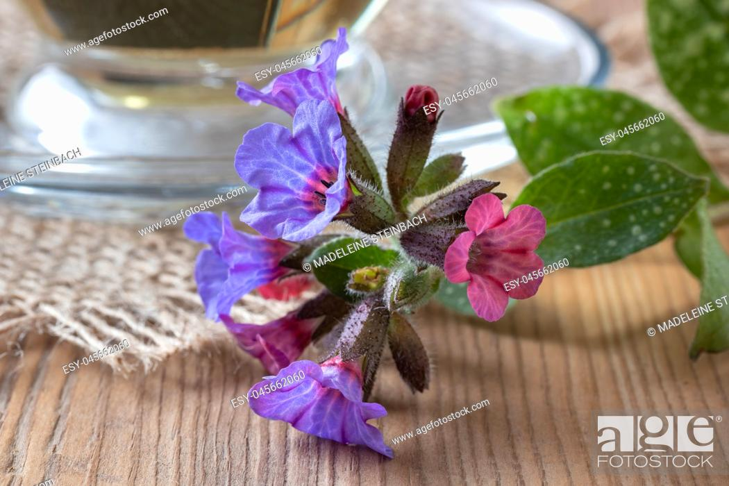 Stock Photo: Detail of fresh lungwort, or pulmonaria flowers on a table.
