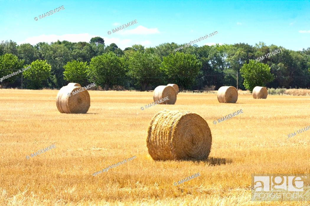 Stock Photo: Hay in the Field, France.