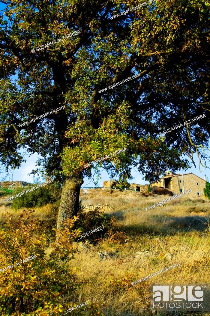 Stock Photo: Pinós, outside of small medieval town with old oak tree in the foreground. Lleida, Solsonés, Catalonia, Spain, Europe. November 2009.