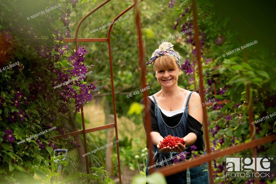Stock Photo: Portrait proud woman harvesting fresh red currants in garden.
