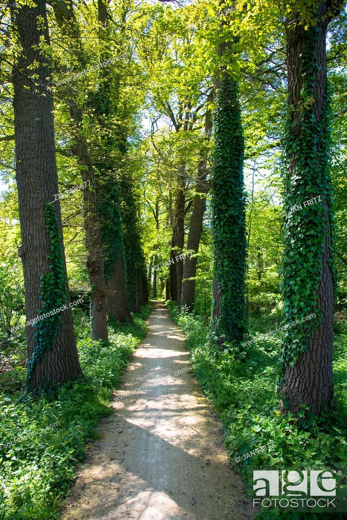 Stock Photo: small bicycle path with huge trees in holland.