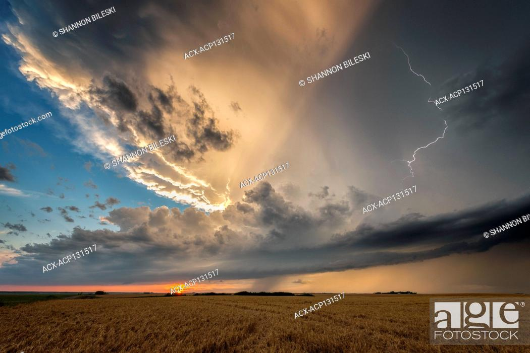 Stock Photo: Storm with lightning over wheat field at sunset in southern rural Manitoba, Canada.