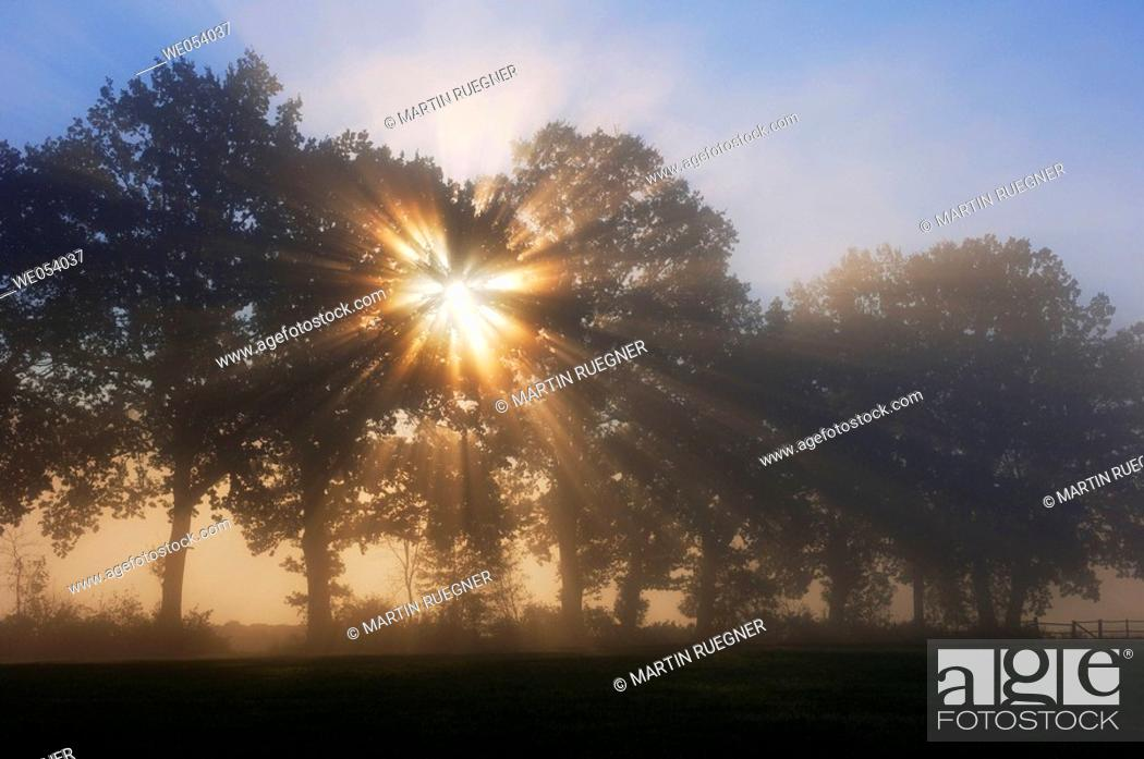 Stock Photo: Sun behind tree with sunrays and mist at morning mood. Bavaria, Germany, Europe.