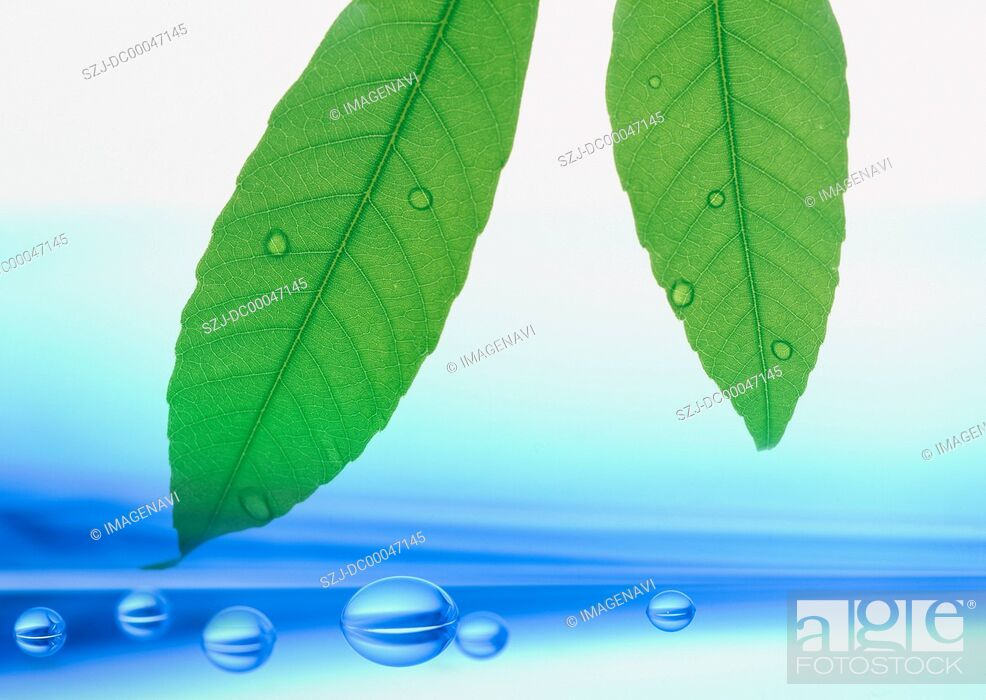 Stock Photo: Leaves and waterdrops.