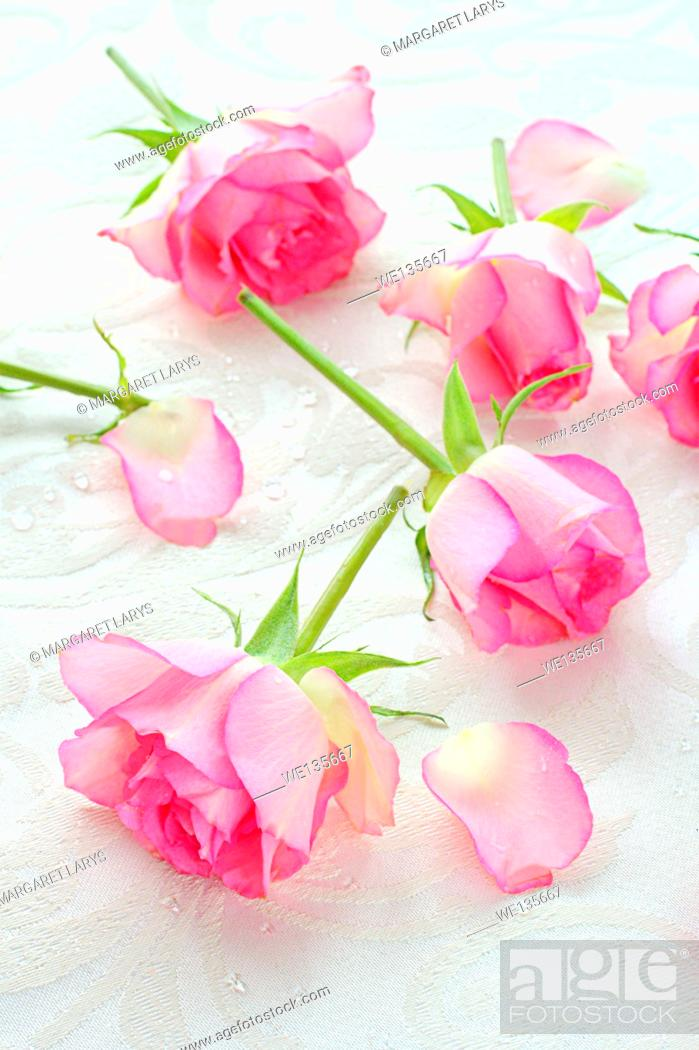 Stock Photo: Pink roses pretty background.