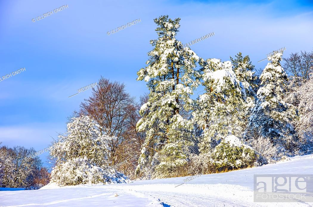 Stock Photo: Wintry scenery with country lane and grove of trees.