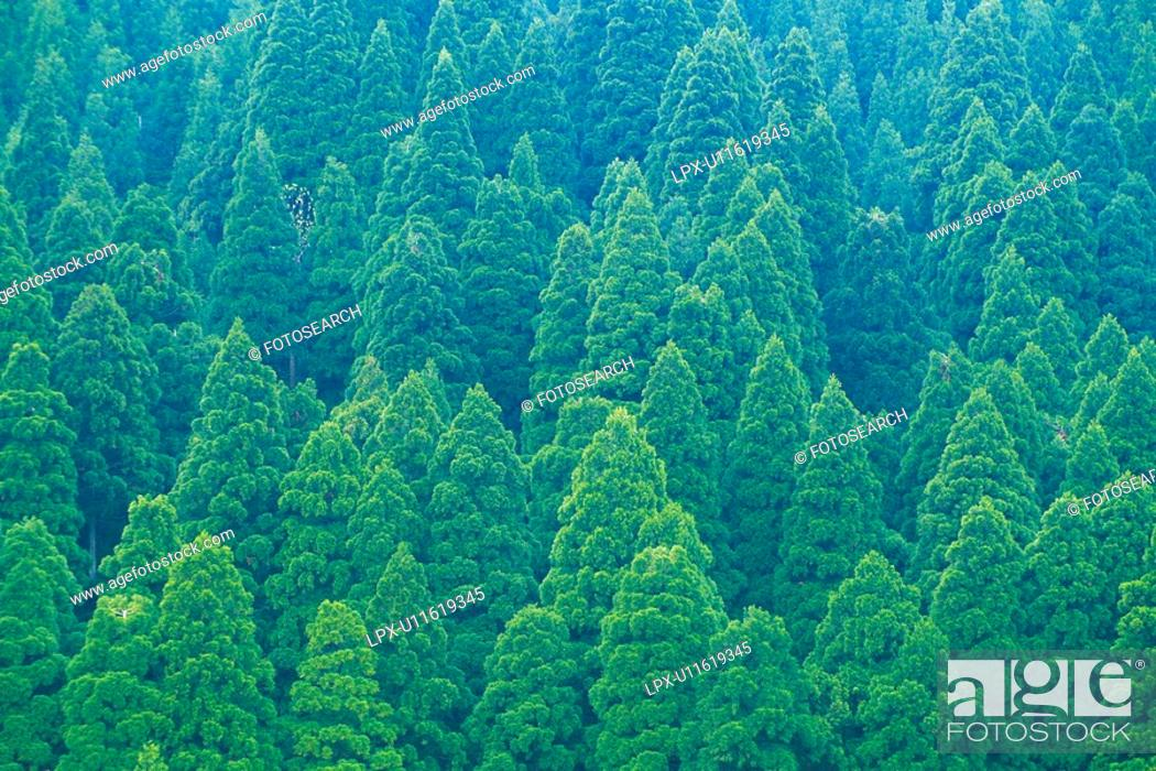 Stock Photo: Trees in the Forest, High Angle View, Pan Focus.