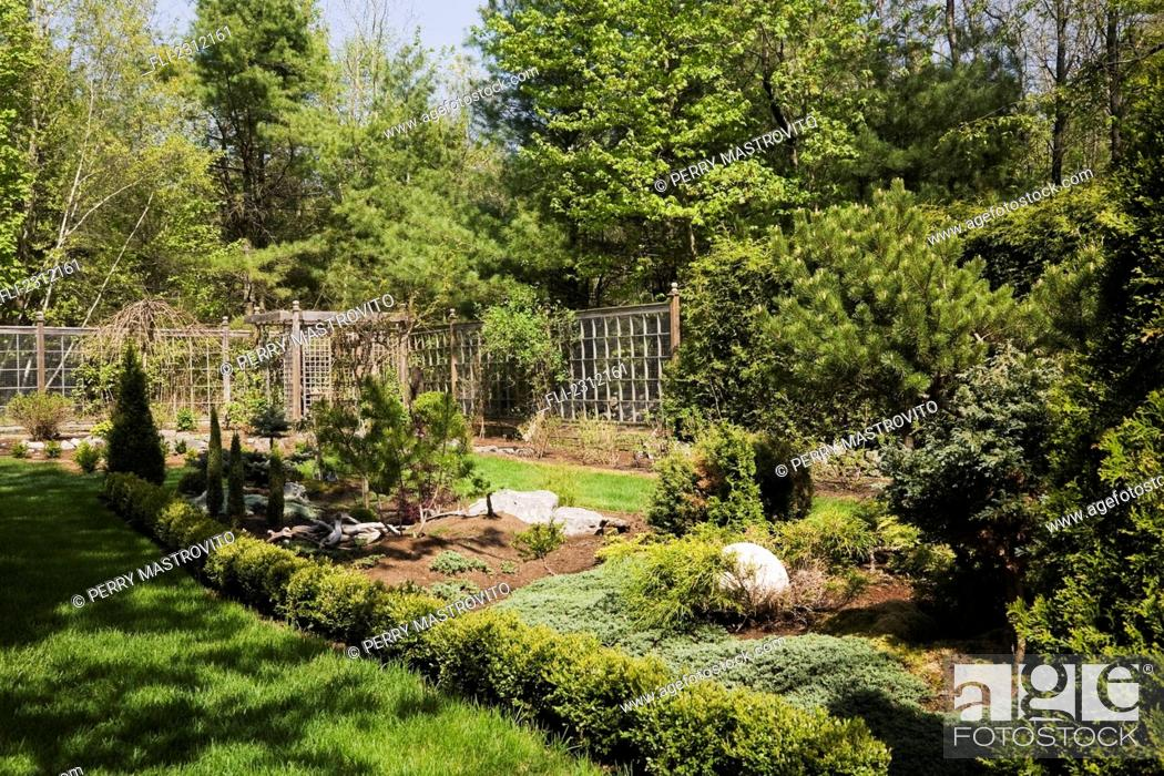 Evergreen Trees And Shrubs In A Garden Border In A Landscaped Back