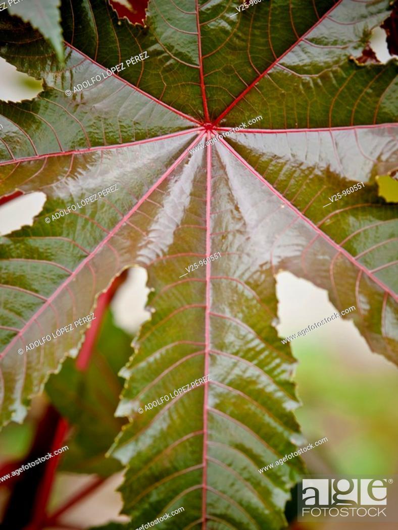 Stock Photo: Wet leaves, Senegal.