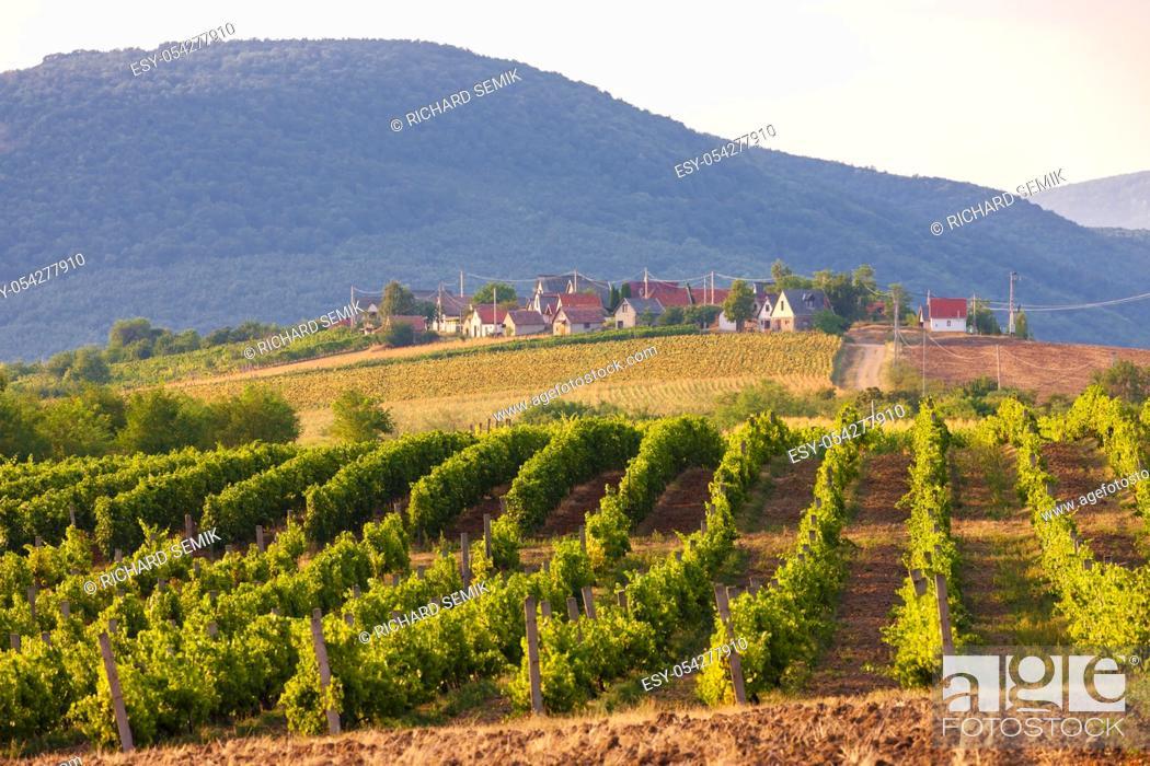 Stock Photo: wine cellars in Bukkzserc, Hungary.