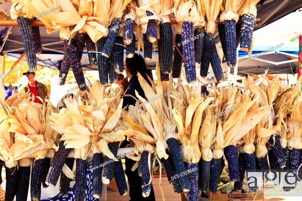 Stock Photo: Usa, New Mexico, Dried Purple Cobs Of Corn Hanging On Display At Saturday Market; Santa Fe.