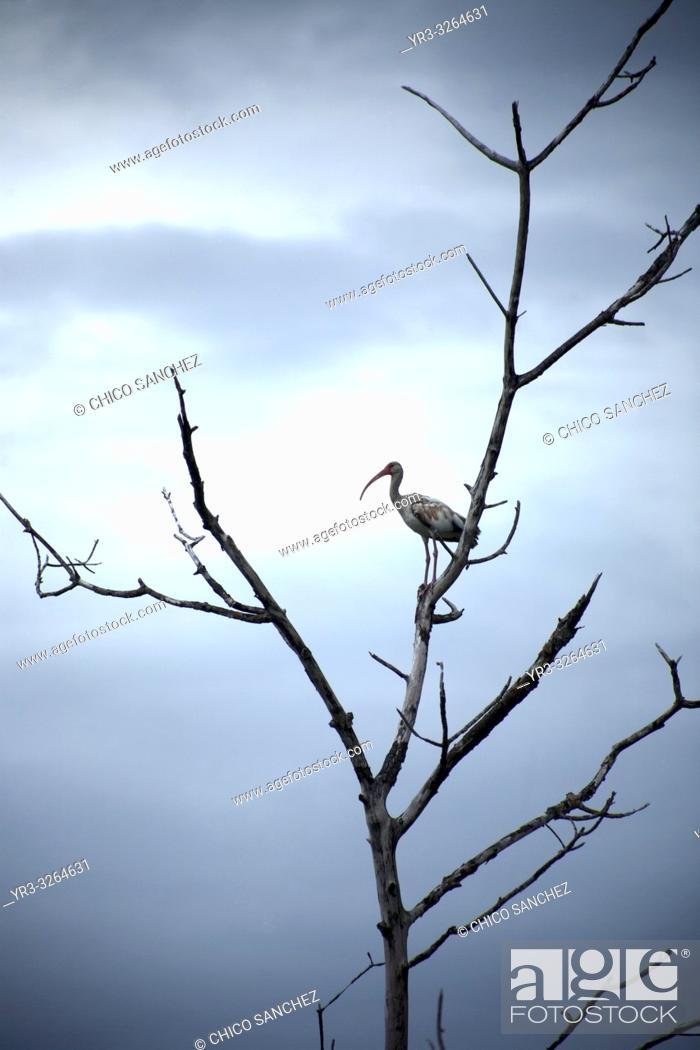 Imagen: A bird perchs on a tree branch in Yucatan, Mexico, June 21, 2009.