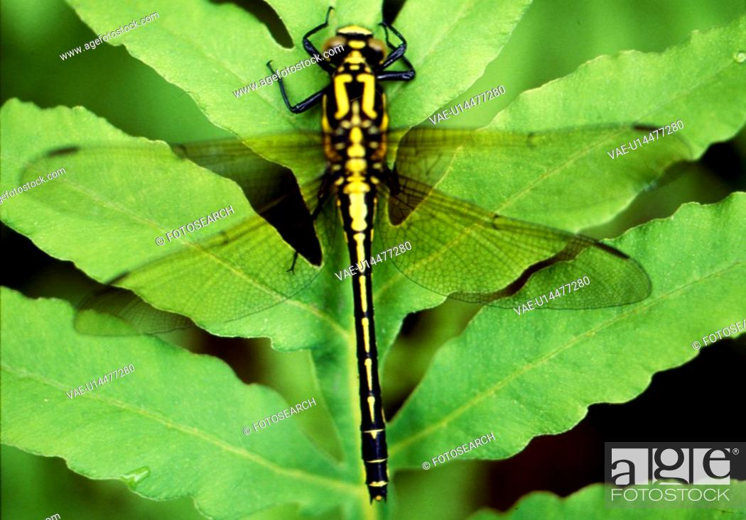 Stock Photo: insects, arthropod, insect, anthropoda, anthropods, insect species, animal.