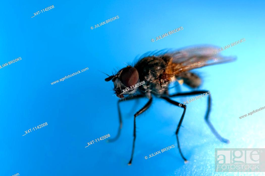 Stock Photo: An extreme close up of a fly resting on a blue plastic paddling pool.