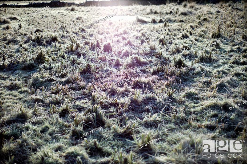 Stock Photo: Backlight, scenery of the countryside in the winter with frost.