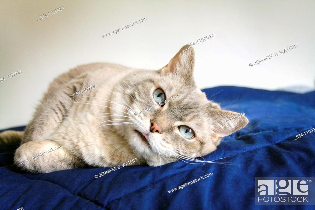 Stock Photo: A housecat resting.