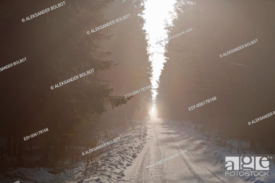 Stock Photo: Snowy road crossing misty coniferous stand.