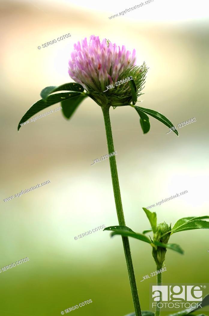 Stock Photo: Flower Wine.