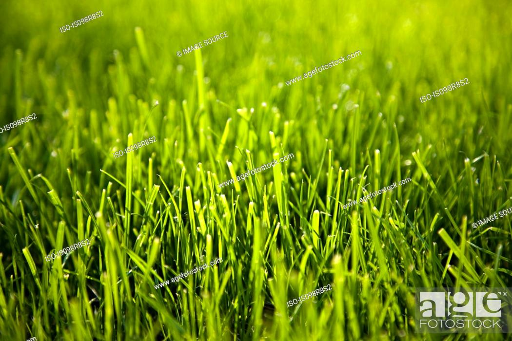 Stock Photo: Close up image of grass.