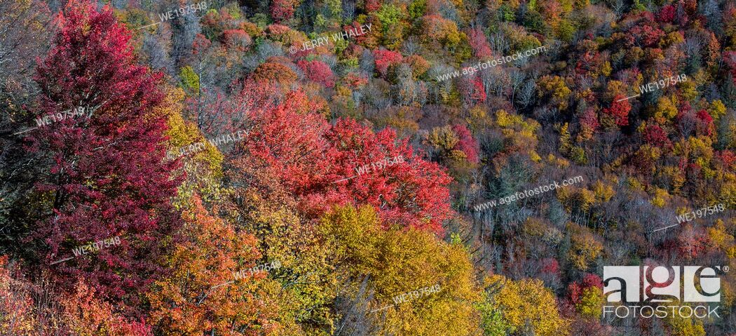 Stock Photo: Autumn Scenics in the Great Smoky Mountains National Park.