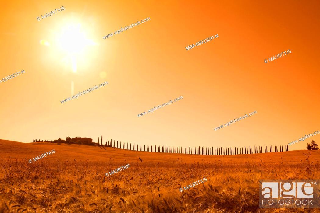Stock Photo: Cypress avenue on the horizon comes to a farm, back light.