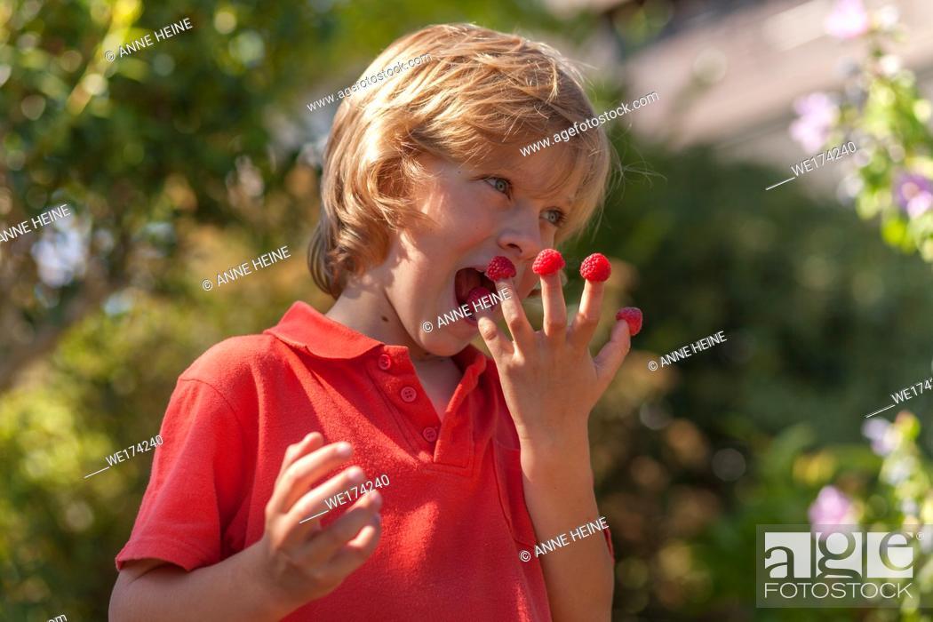 Stock Photo: Child eating raspberries outdoors. Sauerland, Germany.