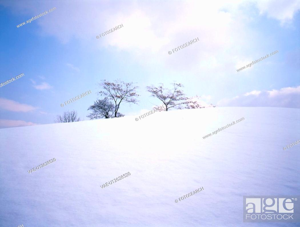 Stock Photo: snow, snow scene, tree, season, winter, winter scene.