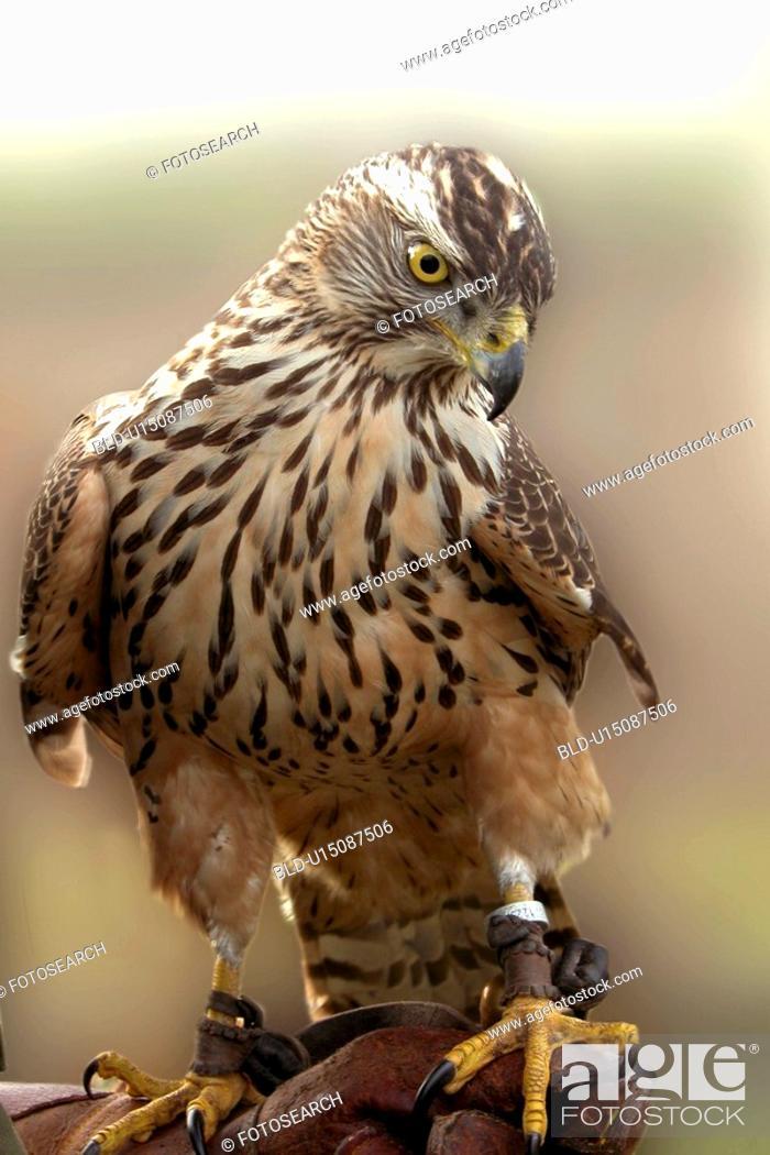 Stock Photo: bird, animals, bill, beak, aves, alfred.