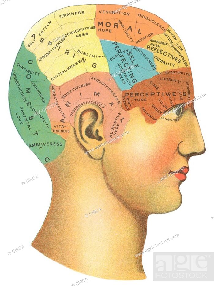 Stock Photo: A vintage diagram of the different psychological areas in the brain.