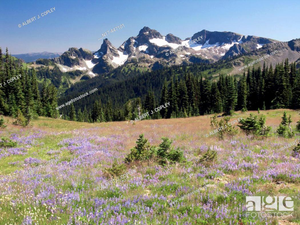 Stock Photo: Flowers on slope of Mt Rainier.